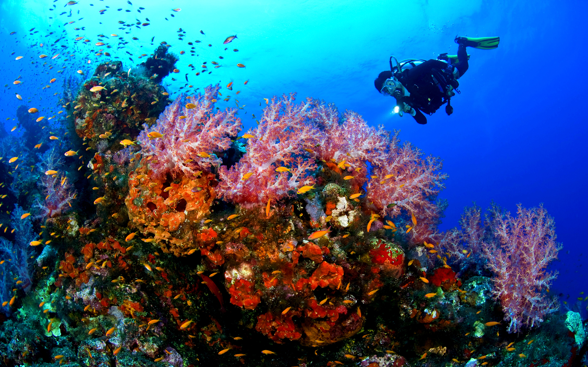 diving coral reef - photo #11